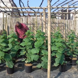In our place we have a small nursery where we do trials with different varieties for our partner Rijkzwaan and meanwhile people get training here.
